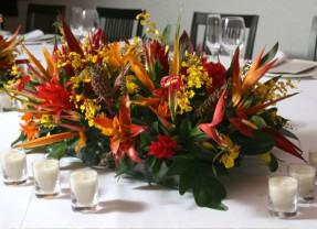 Como cuidar de flores tropicais