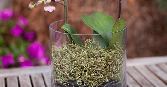 Orquídea – Mais do que apenas uma flor exótica