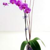 Dicas para cultivar orquídeas